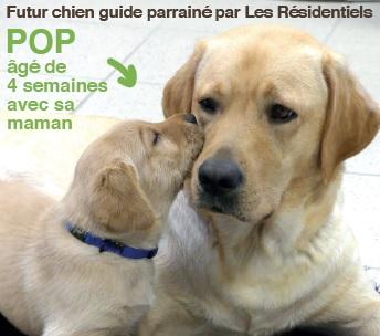 Les Résidentiels financent un chien guide d'aveugle